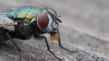 4K Bottlefly Making Digestive ...