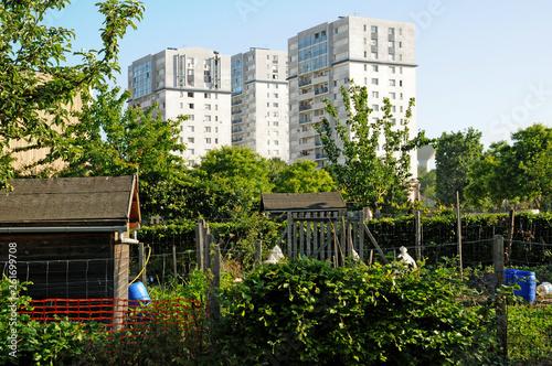 Les Mureaux; France - may 13 2011: allotment garden Wallpaper Mural