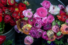 The Pink Lupin For Sale. Persian Buttercup Flowers (ranunculus) - Wedding Arrangement