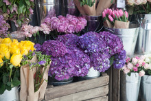 Pots With Beautiful Blooming P...