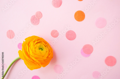 Fotografie, Obraz  Beautiful fresh single yellow color ranunculus on pastel pink background with confetti