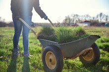 A Woman In A Warm Jacket Drives A Wheelbarrow With Turf. The Process Of Planting Grass And At The Stroke Of The Garden Plot