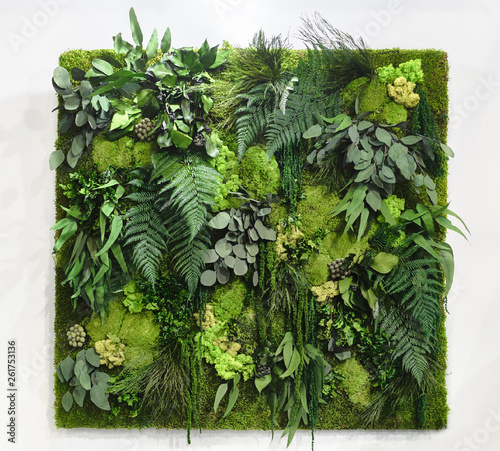 A beautiful vertical background made up of stabilized plants: grass, moss, fern and green leaves Fototapeta
