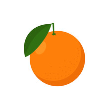 Orange Fruit Illustration. Vector. Isolated.