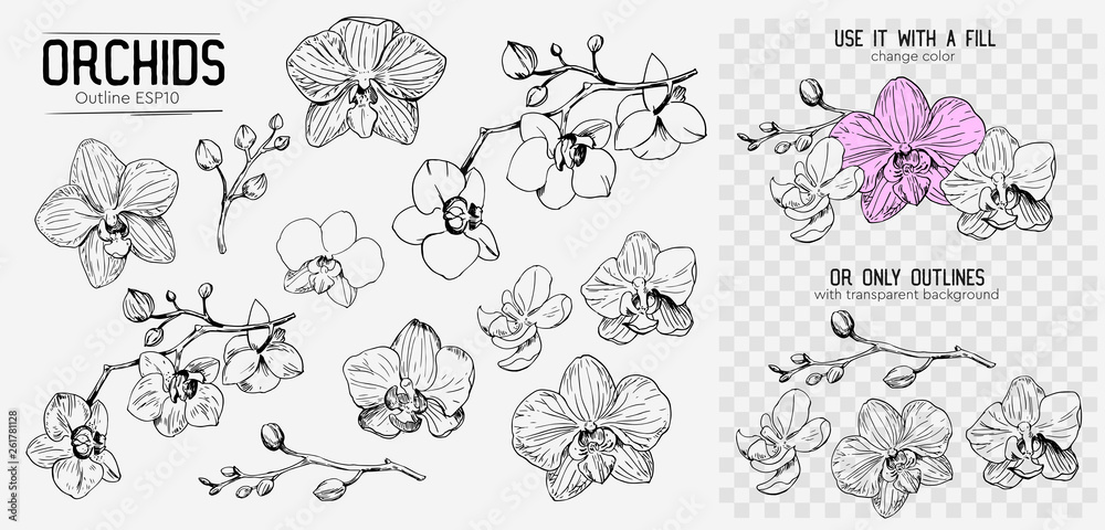 Fototapety, obrazy: Orchids sketch. Hand drawn outline converted to vector. Isolated