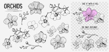 Orchids Sketch. Hand Drawn Out...
