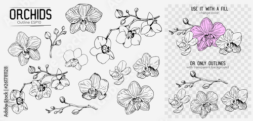 Fototapeta Orchids sketch. Hand drawn outline converted to vector. Isolated obraz