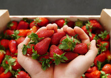 A Man Filled With Strawberries In His Two Palms,