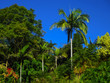 Jungle like landscape - Beautiful rainforest near Brisbane Queensland Australia with intensely blue sky and large trees