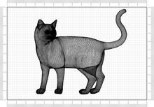 Cat Architect Blueprint