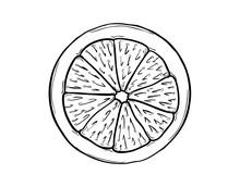 Lemon Slice On White Background
