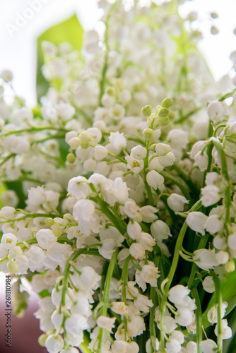Wall Murals Lily of the valley A bouquet of lilies of the valley on a white background