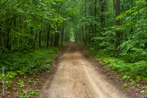 Foto op Canvas Weg in bos Forest road at summer