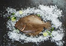 Turbot Fish On Ice