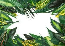 Frame From  Fresh Tropical Lea...