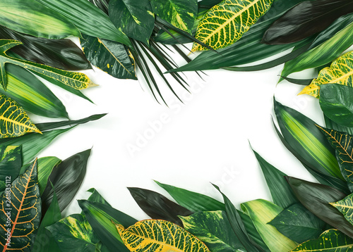 Photo sur Toile Fleur Frame from fresh tropical leaves on white background.