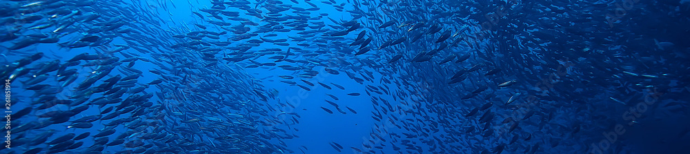 Fototapeta scad jamb under water / sea ecosystem, large school of fish on a blue background, abstract fish alive