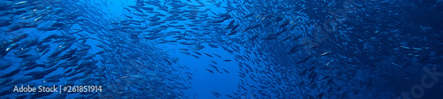 Fotomural scad jamb under water / sea ecosystem, large school of fish on a blue background