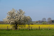 canvas print picture - Fruehling im Muensterland