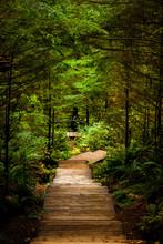 Enlightened Pathway Down