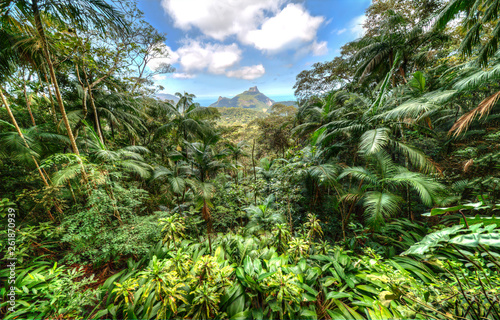 Photo  Atlantic Forest