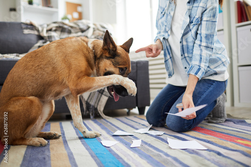 Fotografie, Obraz  Portrait of unrecognizable woman telling off dog for making mess at home, copy s