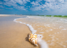 A Seashell Sits Calmly As The Ocean Waves Break Against The White Sand. The Emerald, Turquoise Water Contrasts The Blue Colored Sky On A Sunny, Summer Day In Gulf Shores Southern Alabama.