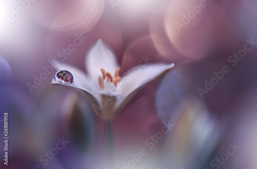 Beautiful Spring Nature Background And Flowers Abstract