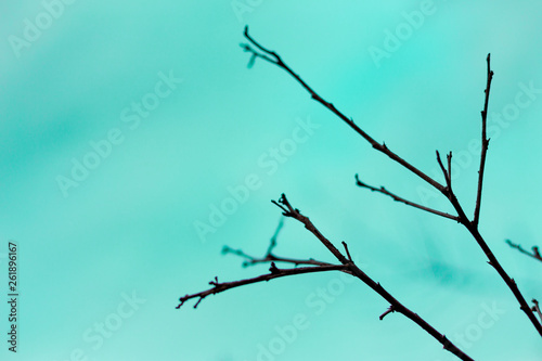 Foto auf AluDibond Reef grun Branches on the sky background