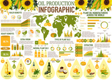 Oil Infographics With Sunflower, Olive, Rapeseed