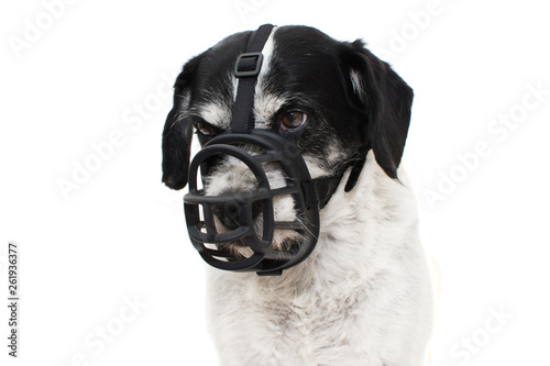 AGGRESSIVE DOG IN MUZZLE. ISOLATED AGAINST WHITE BACKGROUND. Fototapete