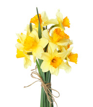 Bouquet Of Beautiful Daffodils...