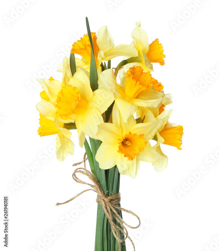 Bouquet of beautiful daffodils on white background