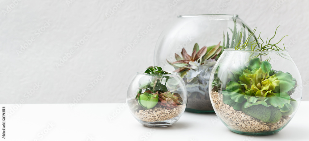 Fototapeta Succulent plants in florarium vases, copy space