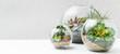 canvas print picture - Succulent plants in florarium vases, copy space