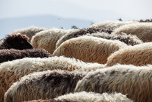 A Flock Of Sheep In The Mounta...