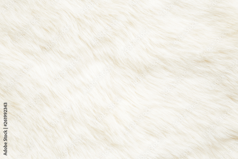Fototapety, obrazy: Light, white, furry coat background. Empty place for text, quote or sayings. Top view. Closeup.