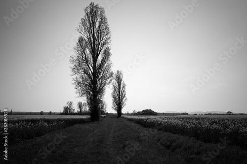 Fotografie, Obraz  campagne en noir et blanc