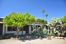 Cactus And Lemon Tree In Avila...