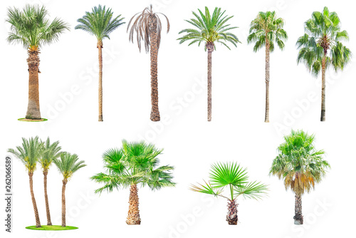 Canvas Prints Palm tree Collection of palm trees isolated