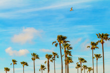 Palm Trees On A Breeze Day