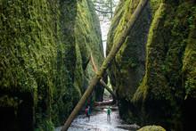 Hiking Lush Green Canyons Of Columbia Gorge, Oregon, USA
