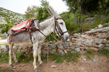 A Gray Donkey Awaits A Rider On A Mountain Road. Lifting Cargo Uphill. Journey Through The Countryside.