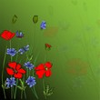 Bouquet of poppies and cornflowers vector illustration eps 10.