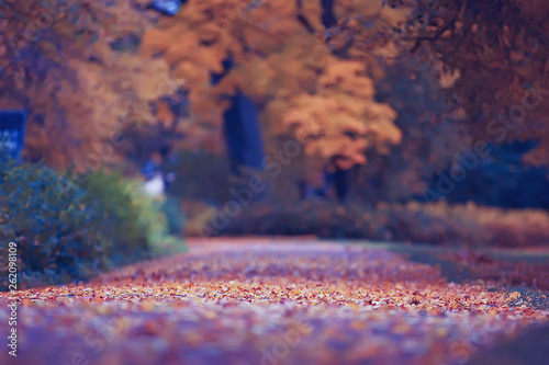 Stickers pour portes Prune October landscape / autumn in the park, yellow October trees, alley in the autumn landscape