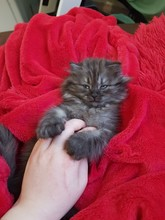 Kitten On A Red Blanket