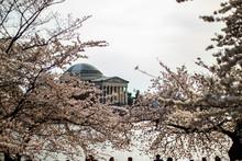 Thomas Jefferson Memorial, Cherry Blossom Festival