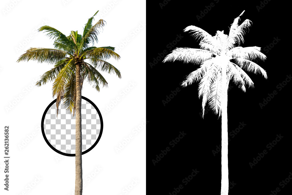 Fototapety, obrazy: Isolated coconut palm tree on white background with high quality mask alpha channel and clipping path. Suitable for natural articles both on fine print and web page.