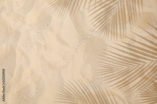 Fototapeta Selective focus of summer and holiday  backgrounds concepts with shadow of coconut leaf on clean sand beach obraz