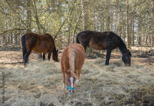 Valokuva Three horses graze in the meadow. Three beautiful horses.